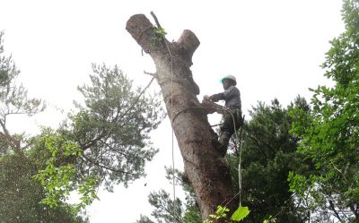 「特殊伐採等技術伝承研修会」を開催します